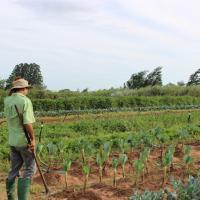 Proyectos de agroecología para el cambio